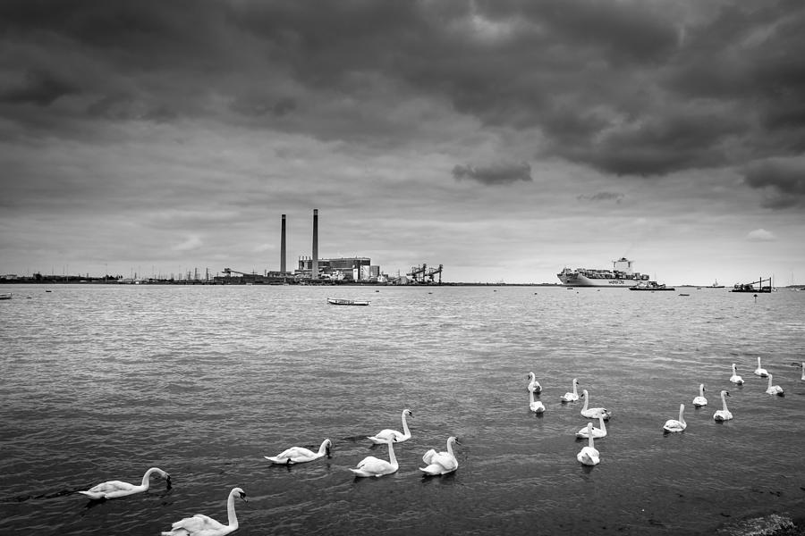 Swan Photograph - Swans And Ships. by Gary Gillette