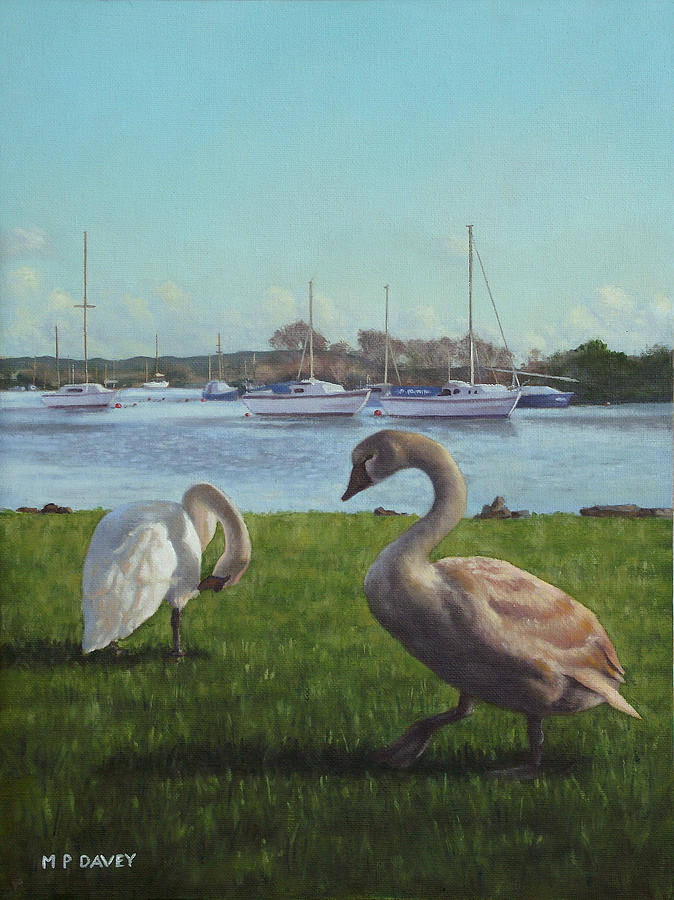 Christchurch Painting - swans at Christchurch harbour by Martin Davey
