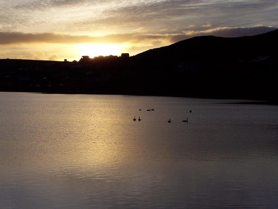 Swans On Loch Photograph by George Leask