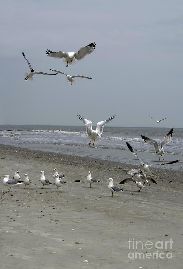 Swarm Photograph