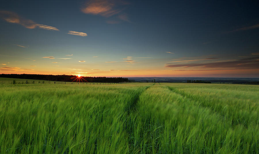 Swaying Barley At Sunset Photograph by By Simon Gakhar