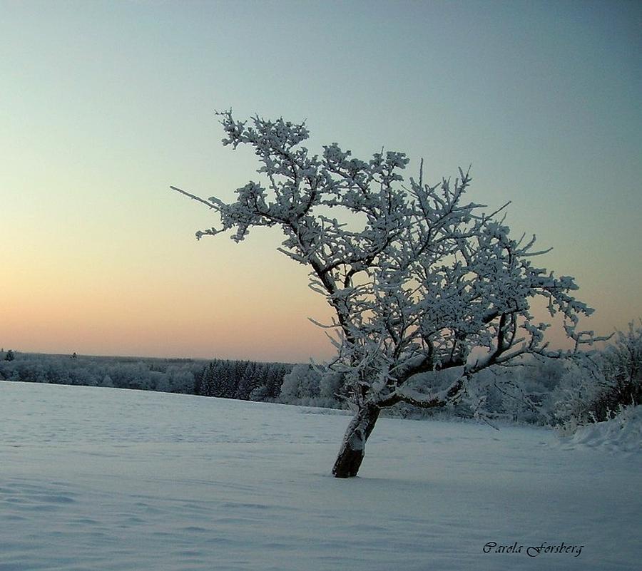 Landscape Photograph - Swedish Winter by Carola Ann-Margret Forsberg