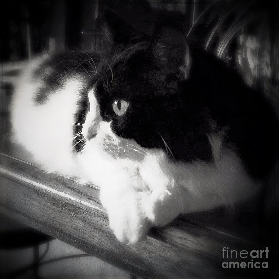 Cat Photograph - Sweet Alice by Beth Williams