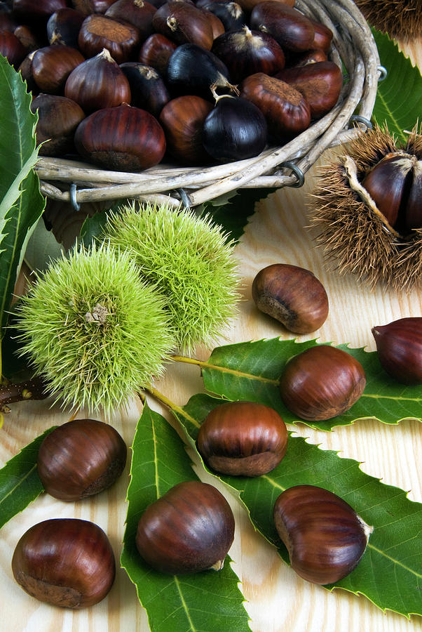 Autumn Photograph - Sweet Chestnuts (castanea Sativa by Nico Tondini