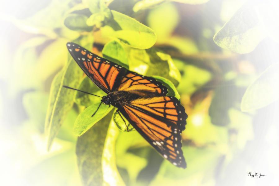Butterfly Photograph - Sweet Dream by Barry Jones