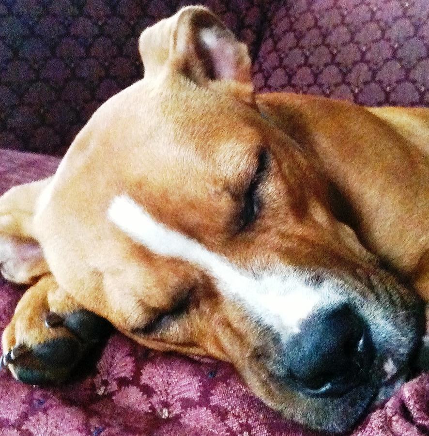 Puppy Photograph - Sweet Dreams by Debbie Finley