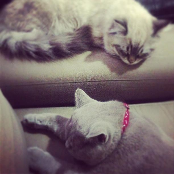 Beautiful Photograph - Sweet Dreams My Two Little Babies by May Pinky  ✨