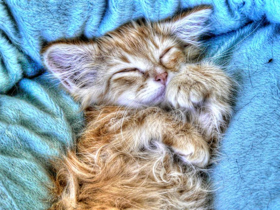 Kitten Photograph - Sweet Dreams Tilly by Linda Rich