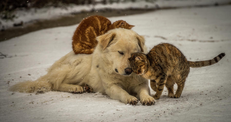 Dog Photograph - Sweet Effusions by Riccardo Lucidi