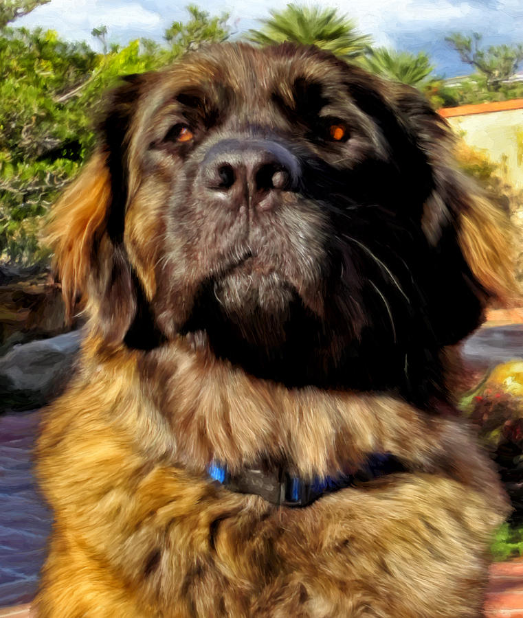 Leonberger Painting - Sweet Emmy by Michael Pickett
