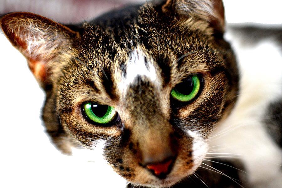 Cat Photograph - Sweet Face by Brandon Garcia