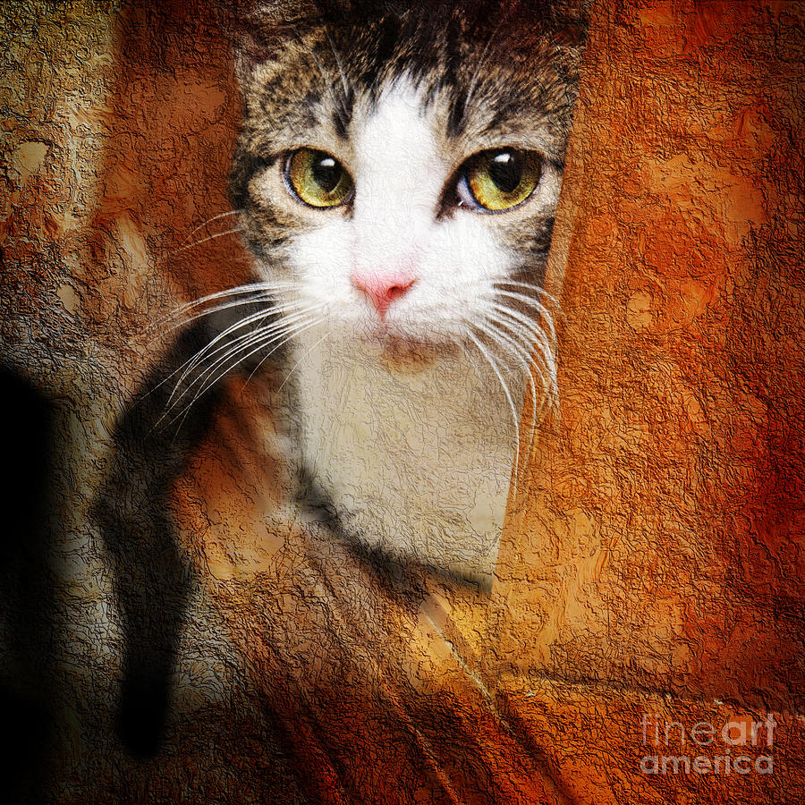 Cat Photograph - Sweet Innocence by Andee Design