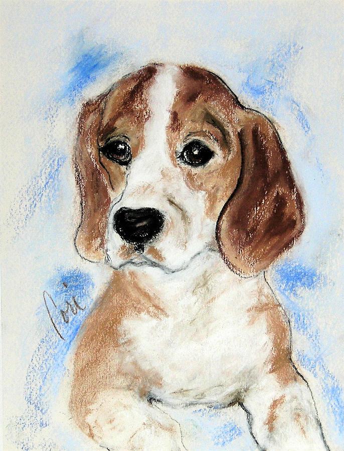 Dog Drawing - Sweet Innocence by Cori Solomon