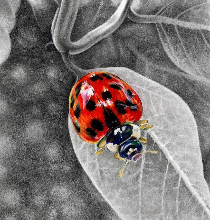 Lady Bug Drawing - Sweet Lady by Natasha Denger