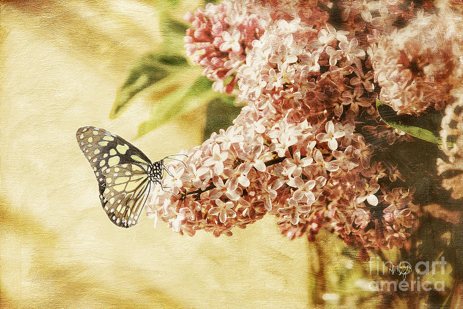 Butterfly Photograph - Sweet Lilacs by Lois Bryan