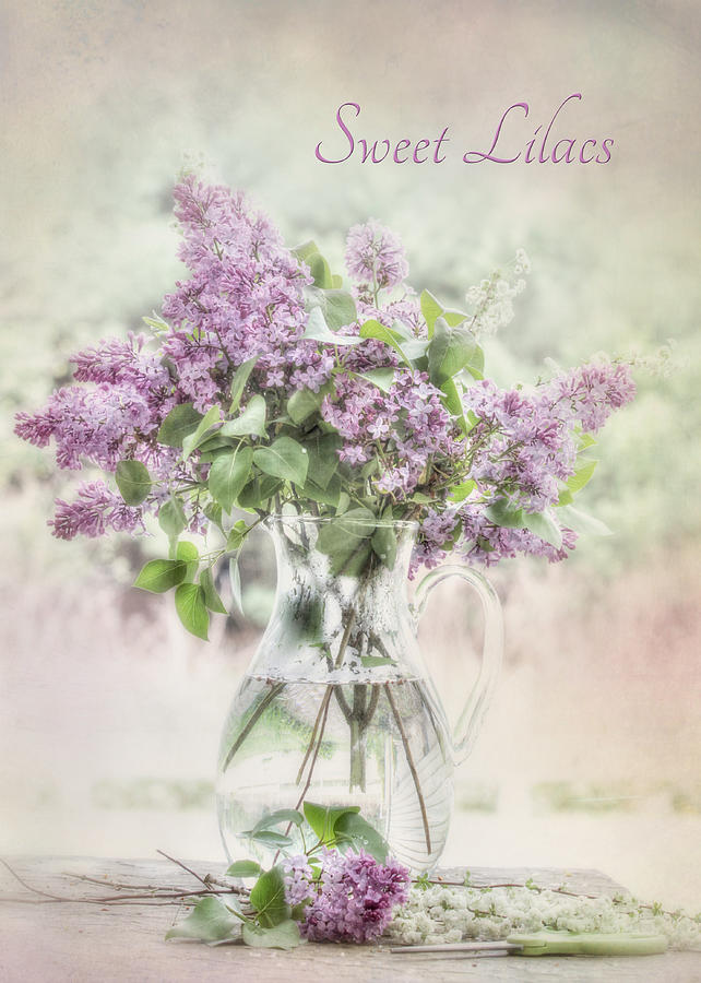 Lilacs Photograph - Sweet Lilacs by Lori Deiter