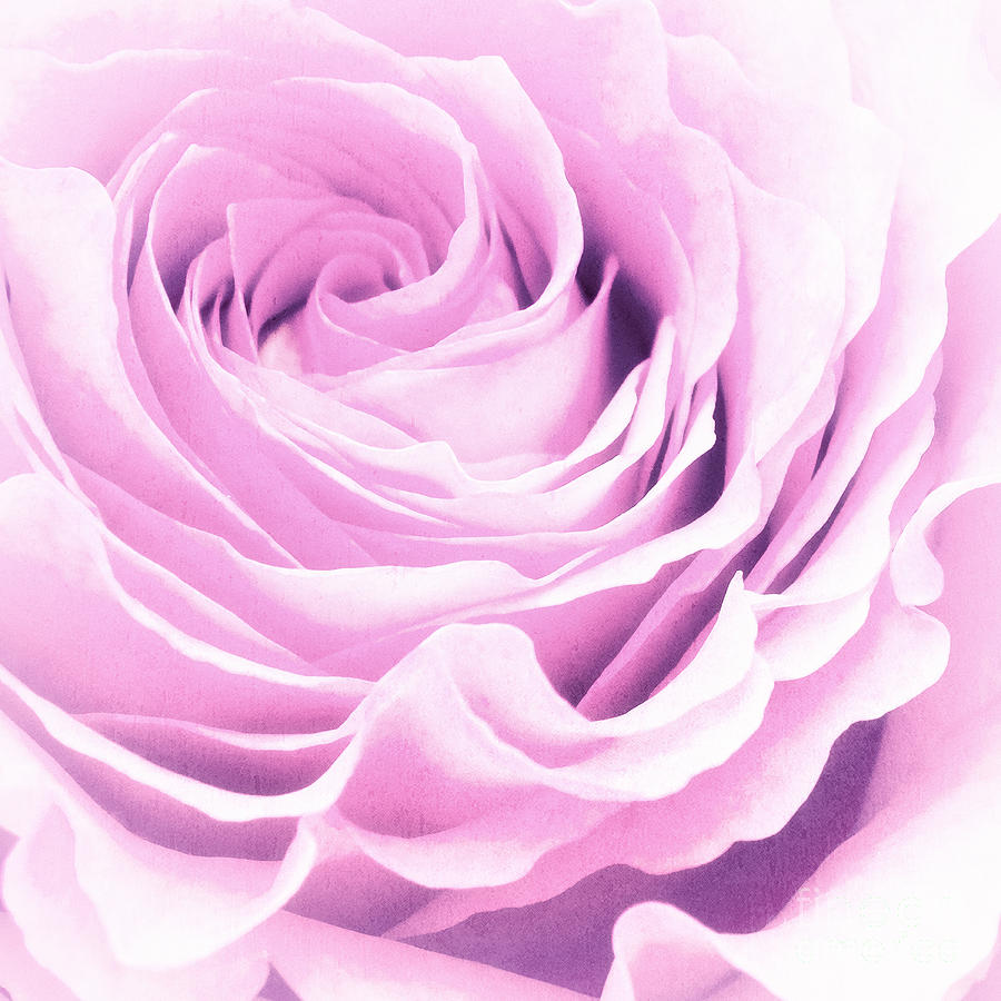 Rose Photograph - Sweet Pastel Rose by Angela Doelling AD DESIGN Photo and PhotoArt