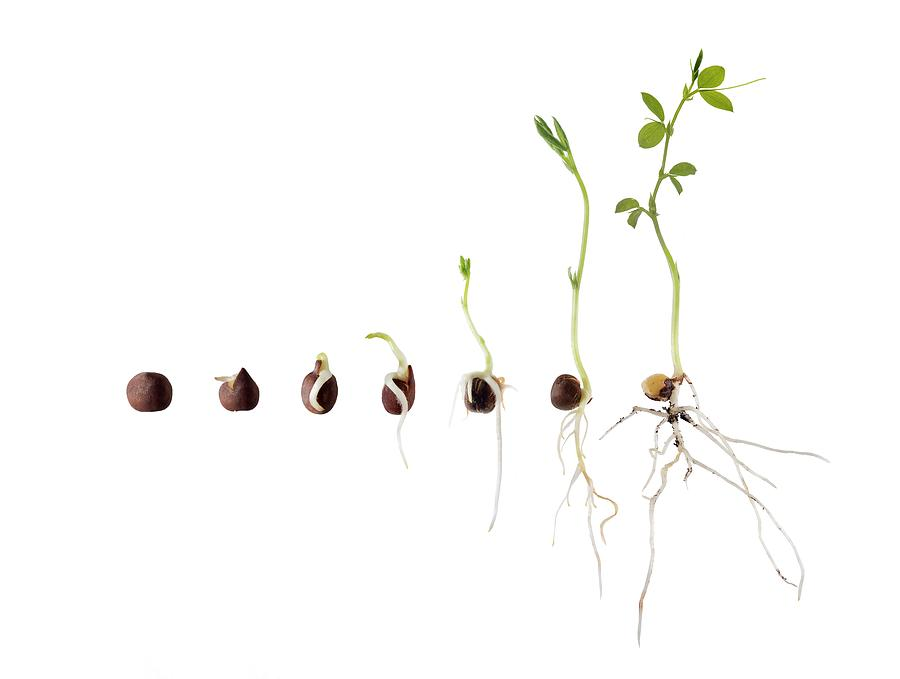 Image result for growing plants