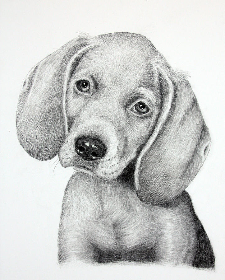 Puppies Drawing - Sweet Puppy Love by Lorraine Foster