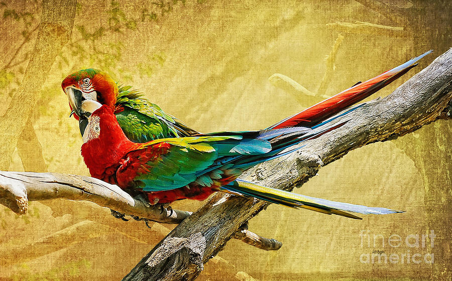 Parrot Photograph - Sweet Sweet Love by Lois Bryan