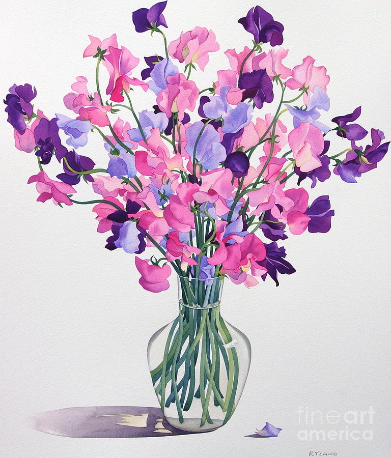 Sweetpea Painting - Sweetpeas by Christopher Ryland