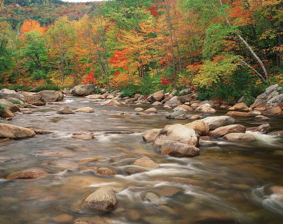 Swift River In Autumn, White Mountains Photograph by Danita Delimont