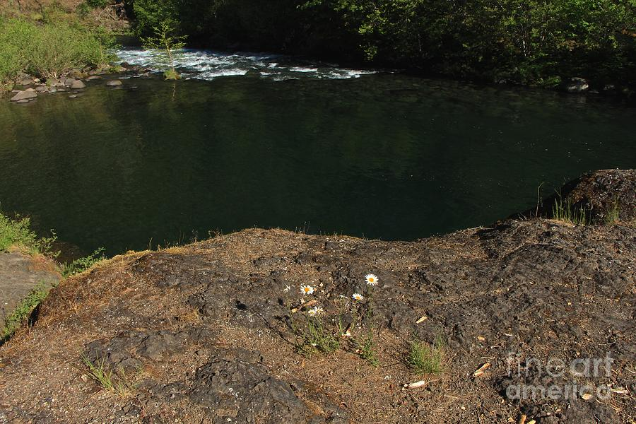 Swimming Hole Photograph - Swimming Hole  by Tim Rice