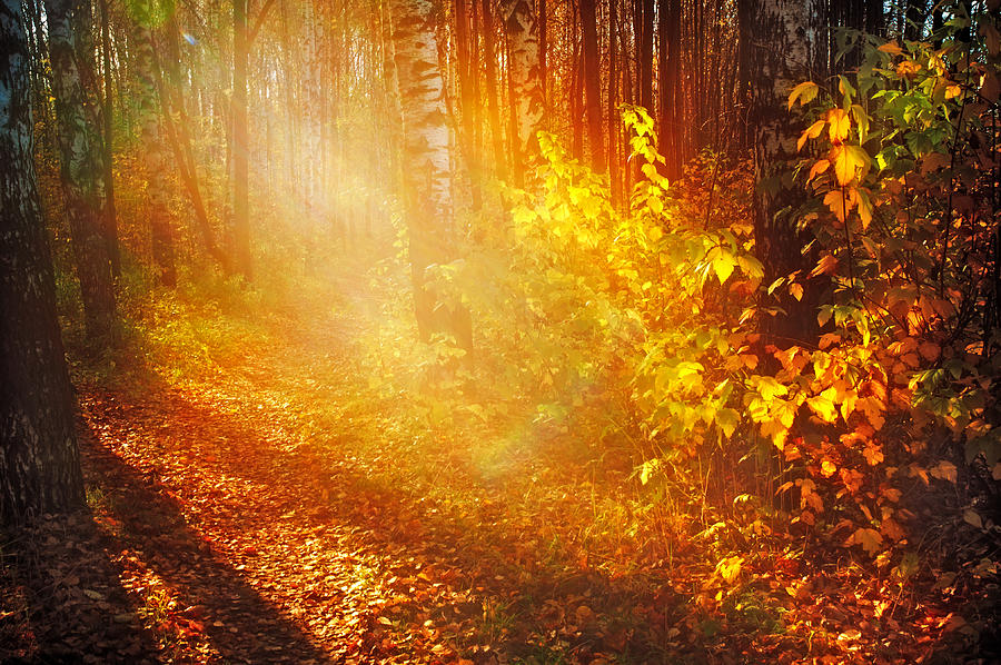 Autumn Photograph - Swimming In Golden Light by Jenny Rainbow