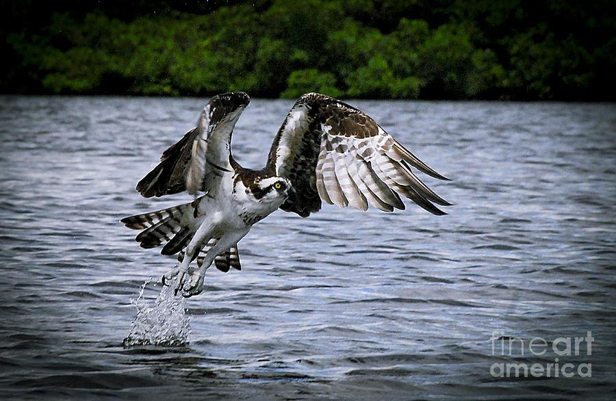Bird Photograph - Swing And A Miss by Quinn Sedam
