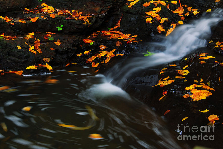Water Photograph - Swirls by Melissa Petrey