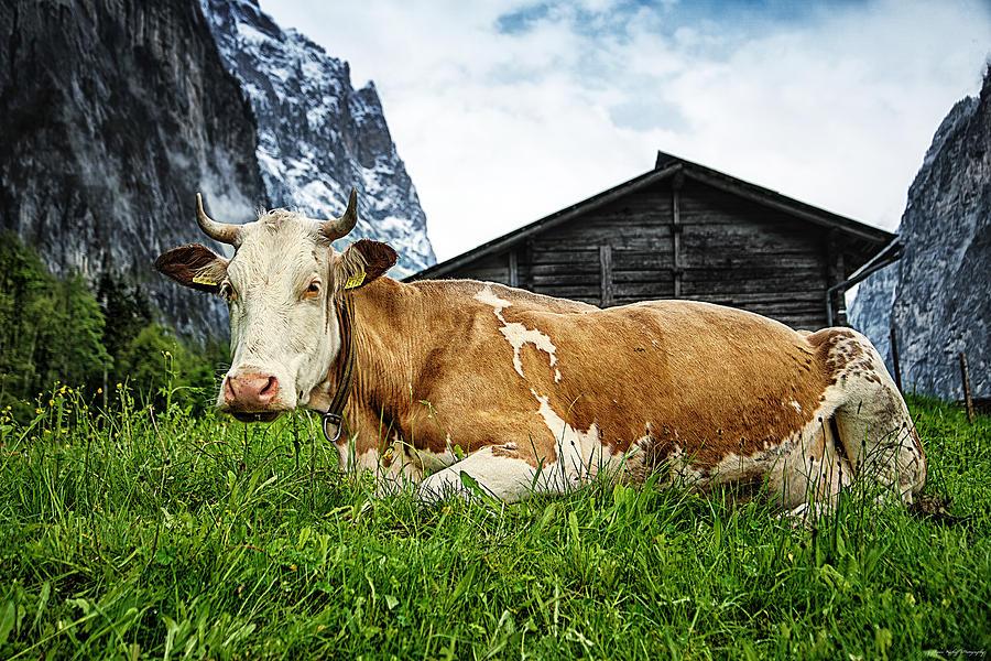 Swiss Photograph - Swiss Miss by Ryan Wyckoff
