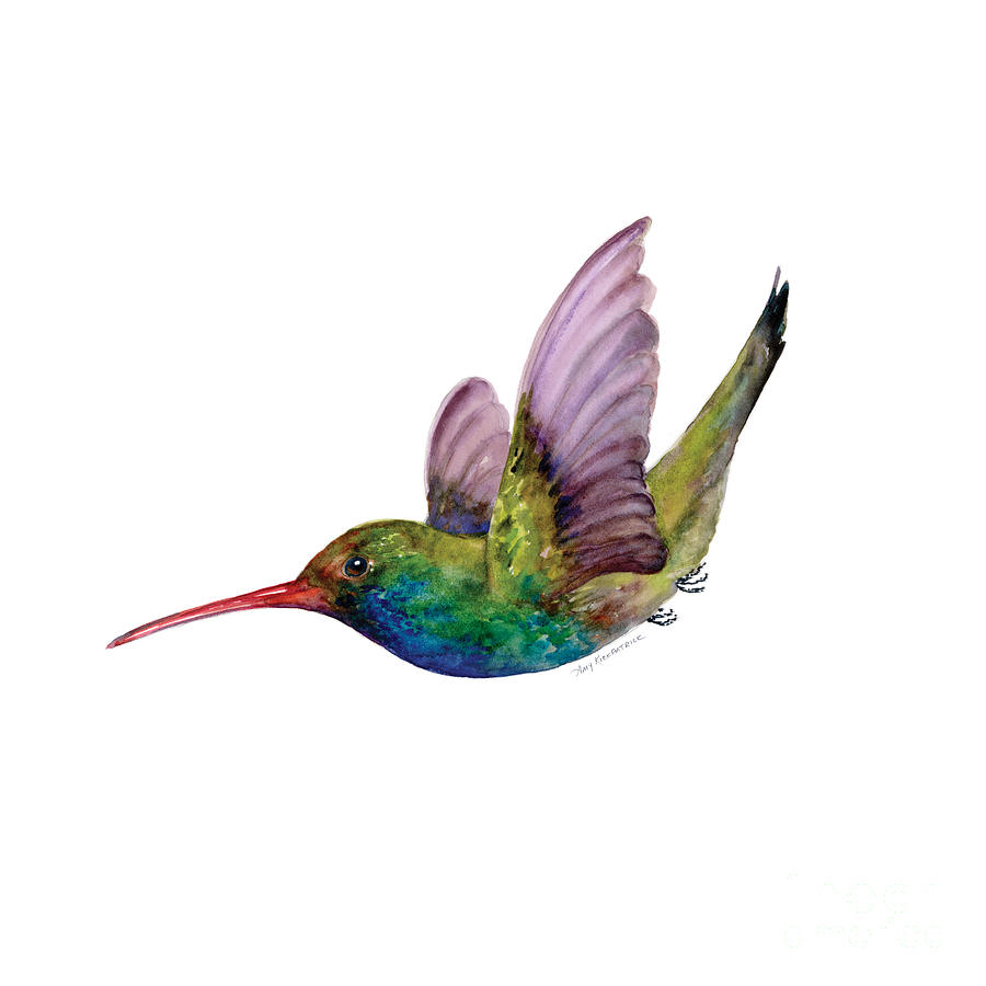 Swooping Broad Billed Hummingbird Painting