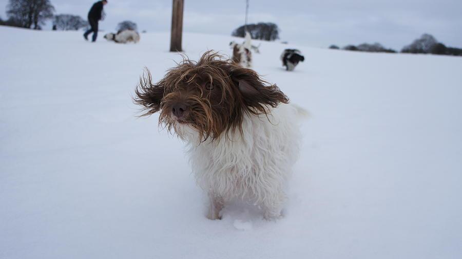 Dog Photograph - Swoosh by Riley Handforth