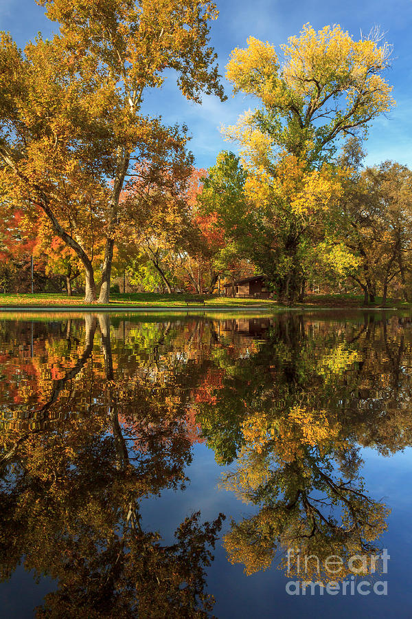 Sycamore Photograph - Sycamore Pool Reflections by James Eddy