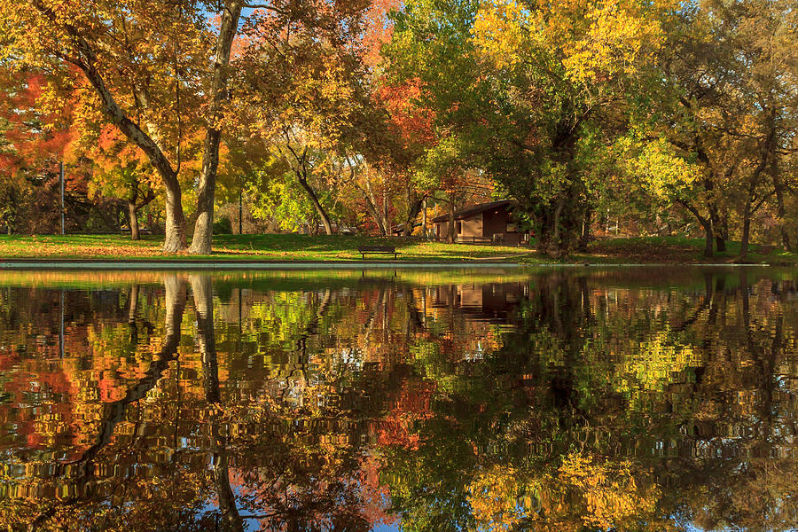 Sycamore Photograph - Sycamore Reflections by James Eddy