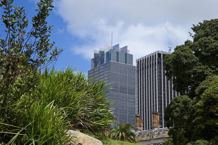 Sydney Cbd Cityscape Seen Beside Plants Photograph by Leopatrizi