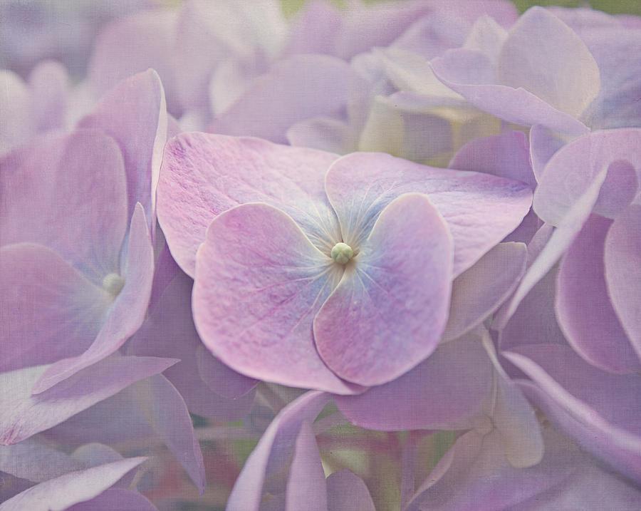 Hydrangea Photograph - Symphony In Purple by Kim Hojnacki