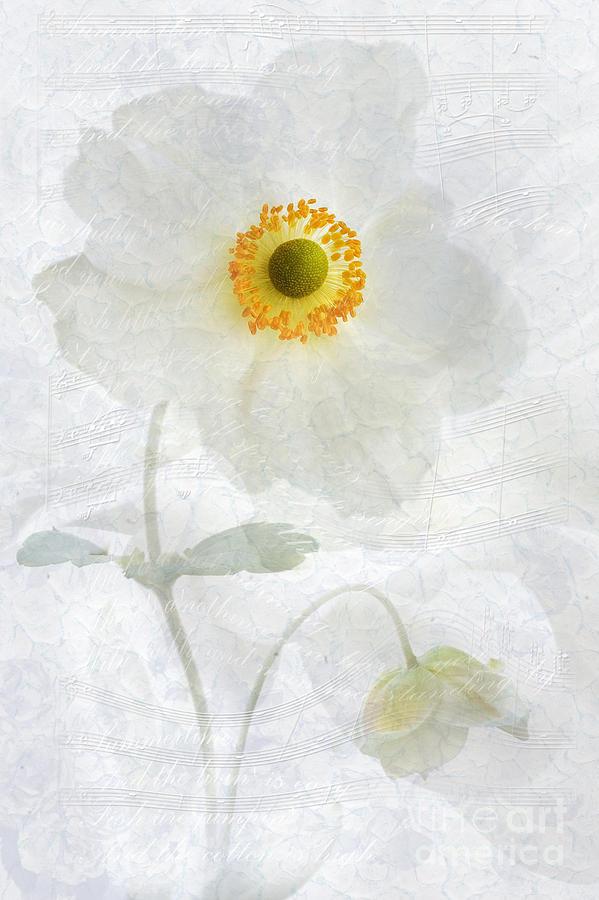 Anemone Hupehensis Photograph - Symphony by John Edwards