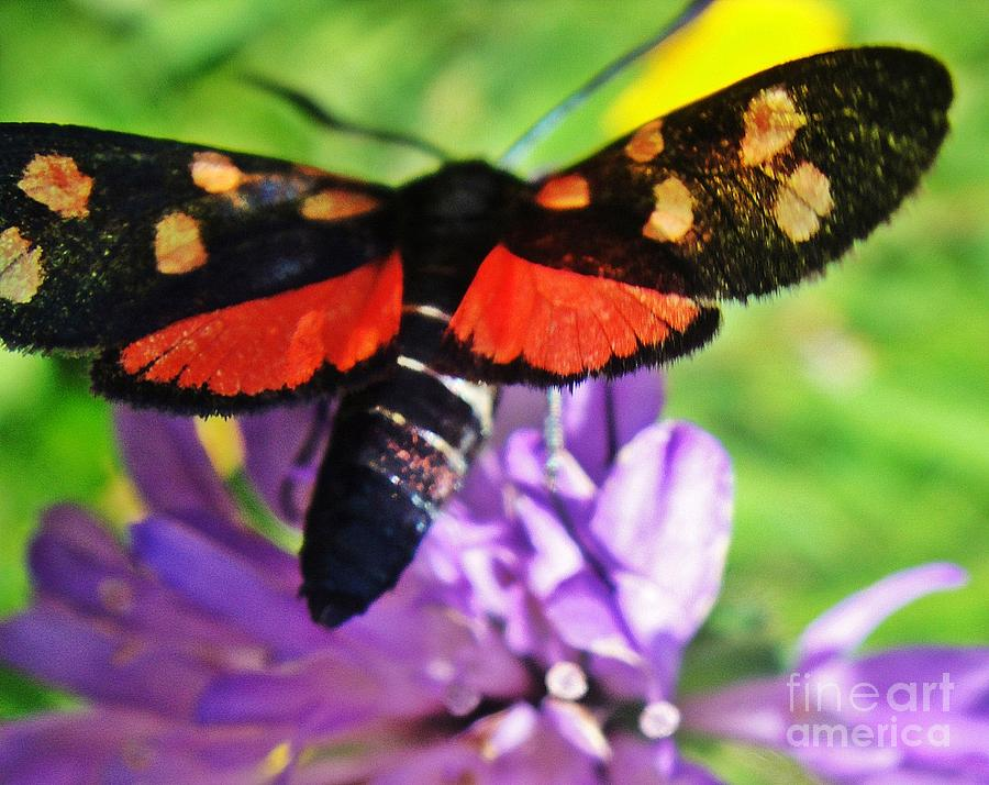 Butterfly Photograph - Symphony Of Colors by Karin Ravasio