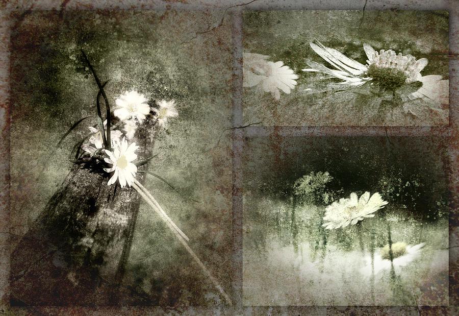 Belles Photograph - Synced Belles Bw by Florin Birjoveanu