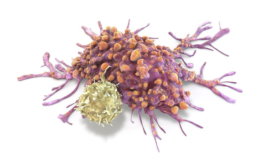 T Lymphocyte And Cancer Cell, Illustration Drawing by Alfred Pasieka/science Photo Library