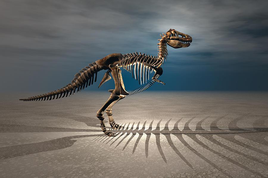 Bipedal Digital Art - T. Rex Dinosaur Skeleton by Carol and Mike Werner