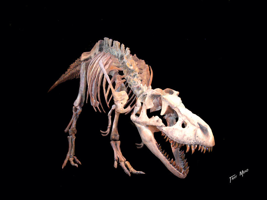 Extinct Photograph - T-rex by Tray Mead