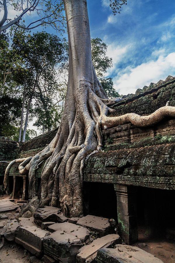 Ta Prohm Temple Photograph by Www.sergiodiaz.net