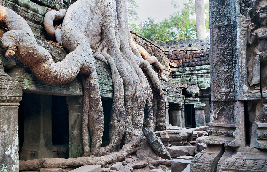 Ta Promh Temple In Angkor Cambodia Photograph by Leezsnow
