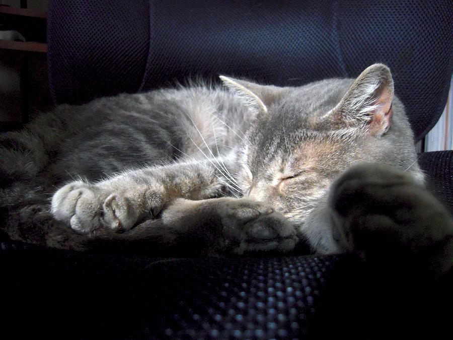 Tabby Cat Office Friend Photograph