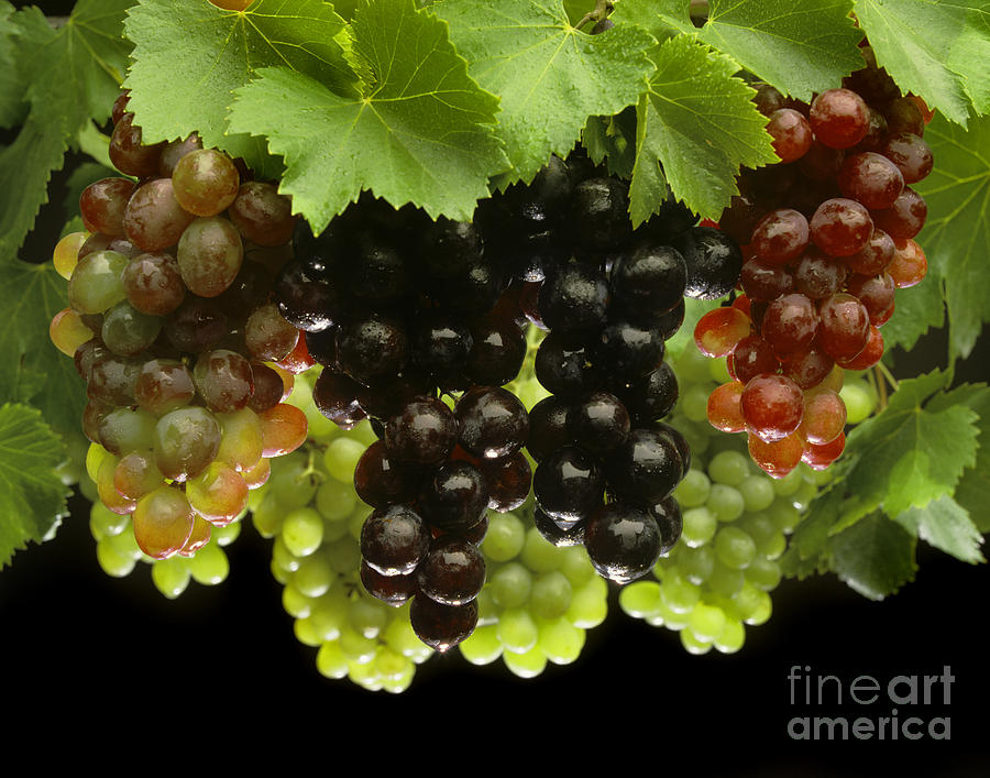 Craig Lovell Photograph - Table Grapes by Craig Lovell