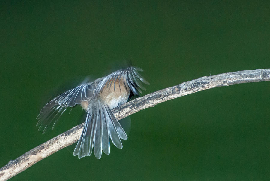 Bird Photograph - Tail Feathers by Paul Johnson