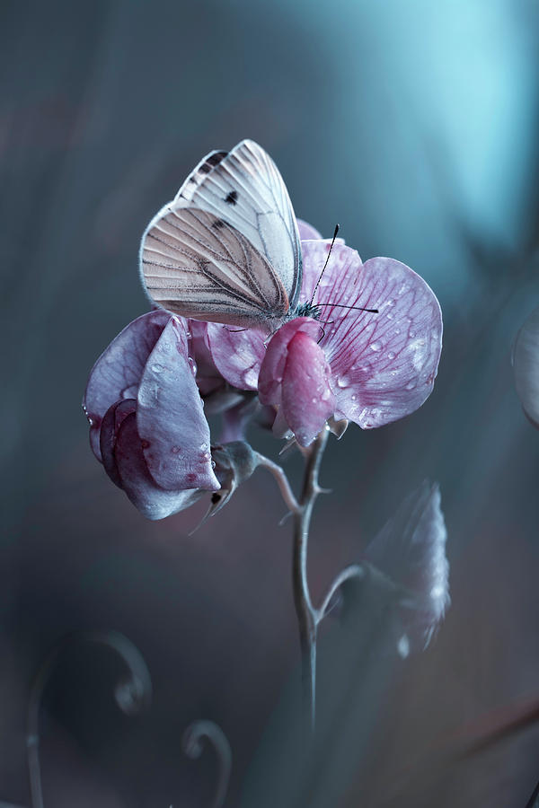 Butterfly Photograph - Tainted Love by Fabien Bravin