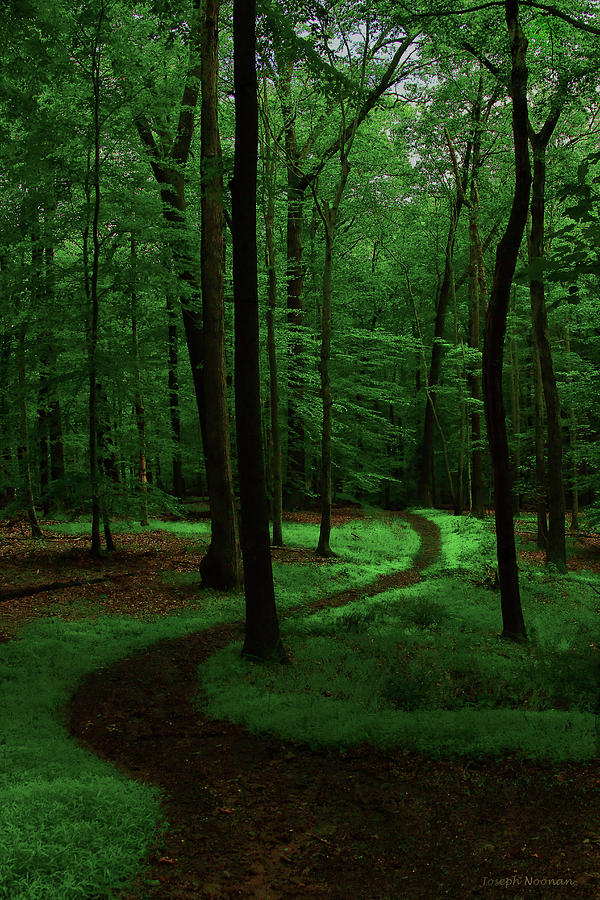 Forest Photograph - Take A Hike by Joseph Noonan